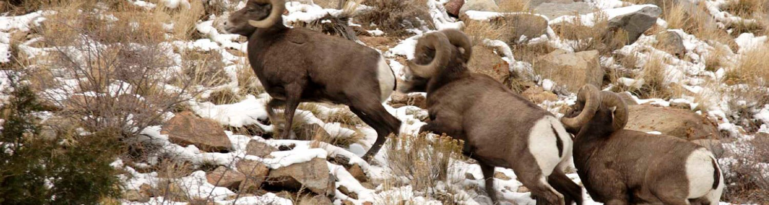 Wildlife Viewing in Glenwood Springs