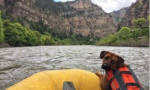 Dog on Raft on Colorado River